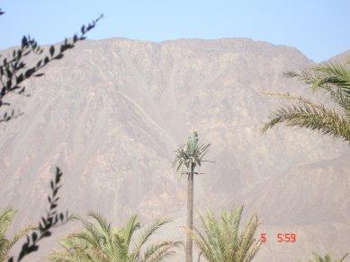 rp egypt tree 1.jpg