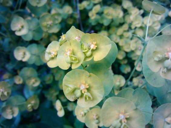 motoluxe plant macro