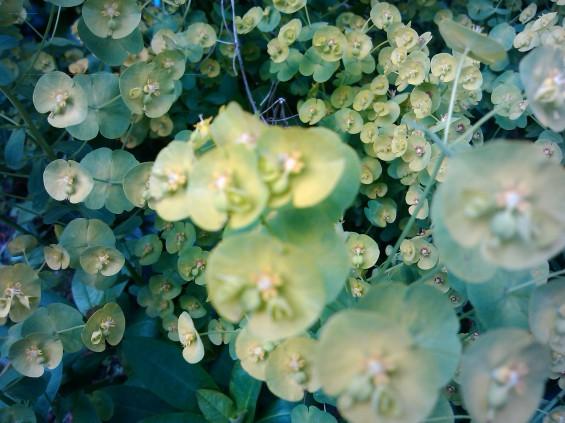 motoluxe plant