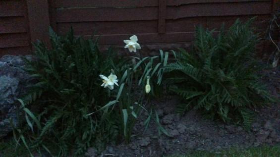 xperia flower