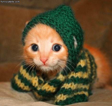 Tiny Kitten Scarf