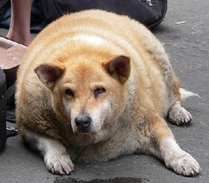 fatdog1