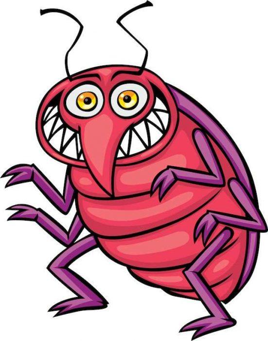wpid bedbug.jpg