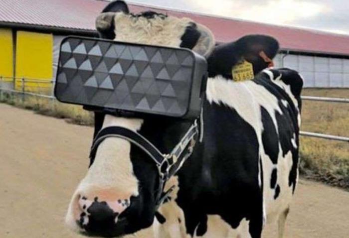 Moo! Milky milky VR!
